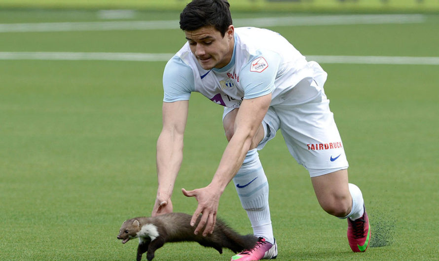 THE REAL MVPS: THESE ANIMALS PHOTOBOMBED SPORTS GAMES AND TOTALLY STOLE THE SHOW
