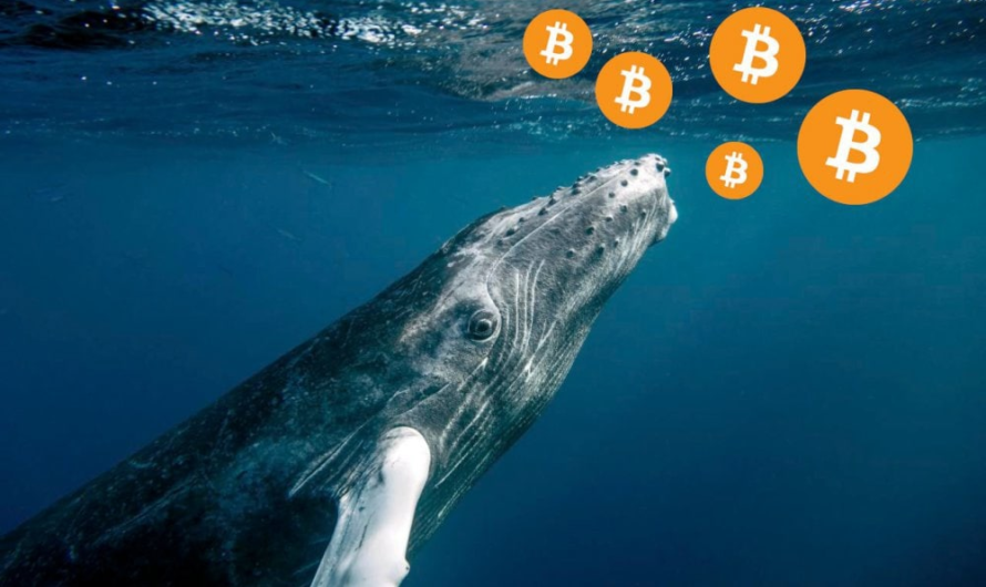 """?The third-largest """"whale"""" bought $170 million worth of BTC in two weeks"""